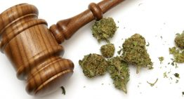 Colorado Marijuana Laws Decoded: All You Wanted To Know About Using Cannabis!