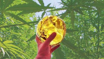 Reviewing the Best Cannabis Concentrates: A Guide To Shatter!