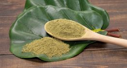Reasons to Take the Most Popular Kratom Strain – Gold Vein Kratom