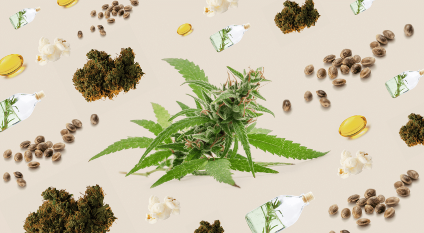 Why Cannabis Products Should be Tested in a Third-Party Laboratory